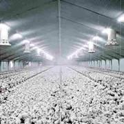 Строительство птицефабрик в Краснодаре фото
