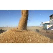 Экспорт зерновых в Молдове фото