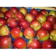 Яблоки на экспорт в Молдове фото