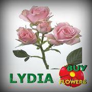 Лидия роза веточная оптом, Rosa spray Lydia купить в Украине