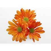 Оранжевые хризантемы фото