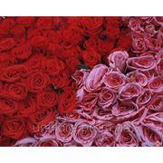 Опт цветов фото