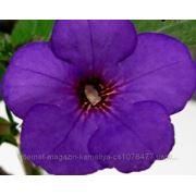 Ахименеc Dark Blue фото
