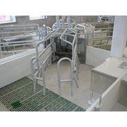 Клетка для подсосной свиноматки с кормушкой фото