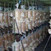 Мешки для выращивания грибов фото