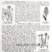 "Бумага белая упаковочная ""Botanical atlas"" фото"