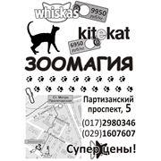 Билборд для магазина Зоомагия фото