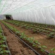 Sistemul de irigare prin picurare, Netafim(Israel) фото