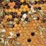 Пчелопакеты 2016 фото