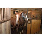 Постой лошадей фото