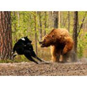 Охота и разведение диких животных фото