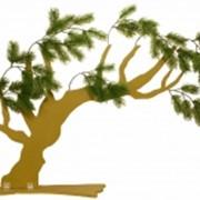 Витринное дерево Хайят фото