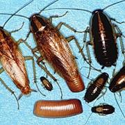Обработка от тараканов фото
