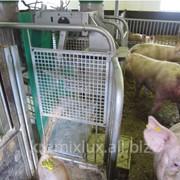 Автоматическая система раздачи корма Fitmix,Системы кормления свиней фото