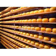 Производство сыра фото