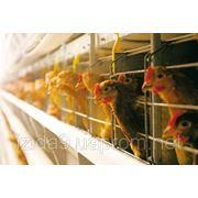 Работа на птицефабрике в Польше фото
