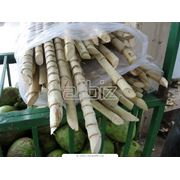 Сахарные заводы и производство фото