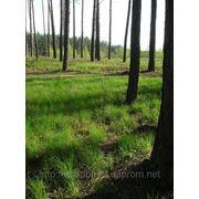 Выходные в лесу фото