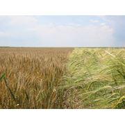 Сельское хозяйство фото