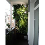 Вертикальное озеленение Green May фото