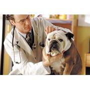 Услуги ветеринарные Ветеринарные услуги фото