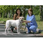 Консультации ветеринарные в Павлодаре фото