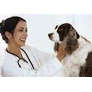 Диагностические исследования ветеринарные фото