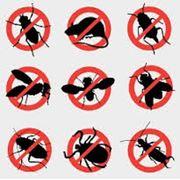 Борьба с комарами Астана Дезинсекция в Астане фото