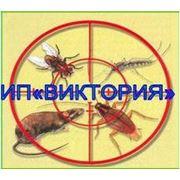 Дезинсекция уничтожение насекомых всех видов фото