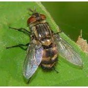 Уничтожение мух фото