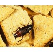 Уничтожение тараканов фото
