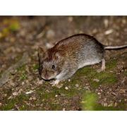 Уничтожение мышей Дезинфекция дератизация Дезстанция Надежда и К ТОО