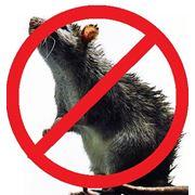 Уничтожение мышей Астана