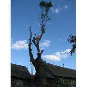 Удалить дерево на кладбище фото