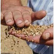 Биржевая торговля зерном фото