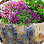Рассада цветов и овощей фото