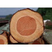 Биржевой брокер лесопродукция фото