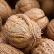 Орехи грецкие. Буракова, СПД фото
