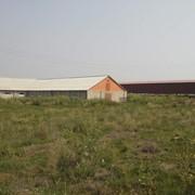 Продам ферму животноводческую в Днепропетровская область. фото
