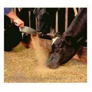 Кормовая добавка Maxcare для сухостойных коров