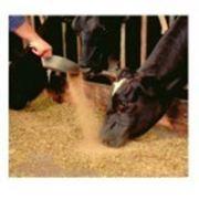 Кормовая добавка Maxcare для лактирующих коров