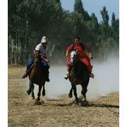 Организация конного туризма фото