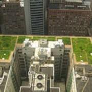 Озеленение крыш домов фото