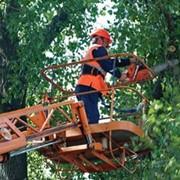 Спил, обрезка деревьев фото