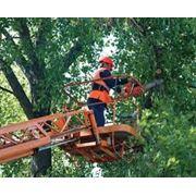 Валка деревьев спил ветоккронирование. фото