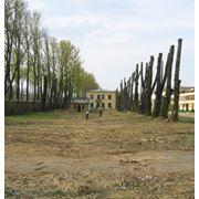 Валка и уборка деревьев фото