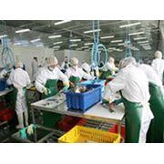 Предприятия пищевой промышленности фото