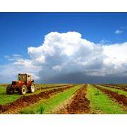 Удобрение почвы фото