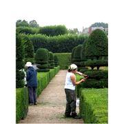 Уход за садом (санитарная и формовочная обрезка обработка ядохимикатами)
