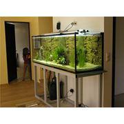 Смена декораций для аквариумов фото